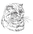 hand drawing cat 9 vector image