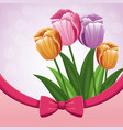 beauty tulips flower ribbon bow decorate vector image
