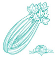 Outline hand drawn sketch of celery flat style vector image vector image