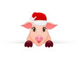 piggy new year symbol looks out of paper vector image vector image