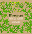 wormwood plant frame on color background vector image vector image