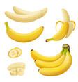 banana fruits exotic desserts natural tropical vector image