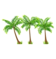 coconut palm trees set isolated on white vector image