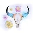 cow bull skull vector image