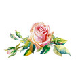 decorative hand painting rose isolated on white vector image vector image