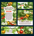 vegetables and green veggies farm food sketch vector image vector image