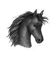 Black horse head sketch portrait vector image vector image