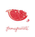 pomegranate fruit doodle vector image vector image