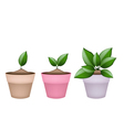 Lovely Green Trees in Terracotta Flower Pots vector image vector image