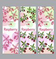 herbal tea collection raspberry banner set vector image vector image