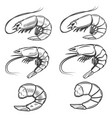 set of shrimps icons isolated on white background vector image vector image