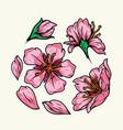 beautiful sakura flowers vintage colorful concept vector image vector image