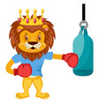 lion boxing on white background vector image vector image