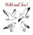 set with seagulls on isolated white background vector image vector image