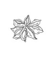 isolated seasoning star anise on white background vector image