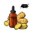ginger essential oil bottle and ginger root hand vector image vector image