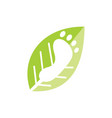 leaf logo design template isolated vector image