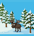 moose stands in snow field vector image