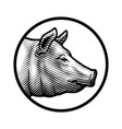 pig head logo in engraved style vector image