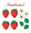 set with strawberries flowers and leaves isolated vector image
