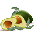 avocado realistic on white background vector image