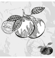 Hand drawn decorative grapefruits vector image vector image