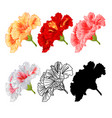 hibiscus tropical flowers various colours natural vector image vector image