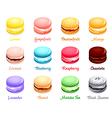 macaron flavors vector image vector image