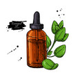oregano essential oil bottle and oregano leaves vector image vector image