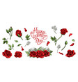 red roses hand drawn elements colored vector image