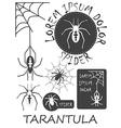 Set of vintage spider labels badges and design vector image