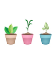 Beautiful Green Trees in Ceramic Flower Pots vector image vector image