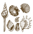 sea set with seashells mussels and mollusks vector image