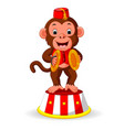 cute monkey playing percussion hand cymbals vector image vector image