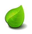 Glossy green leaves vector image vector image