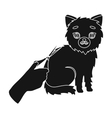 Grooming of a cat icon in black style isolated on vector image