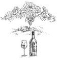 hand drawn grape branch and wine bottle vector image vector image