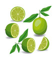 lemon fruit whole and sliced in colorful vector image vector image