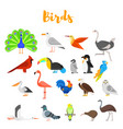 flat style set of birds vector image