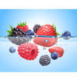 berries in water realistic composition vector image vector image
