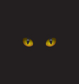 Cat eyes in the dark vector image vector image