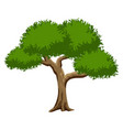 green tree isolated on white background vector image vector image