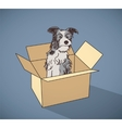 Sad homeless street dog alone in box color vector image vector image