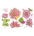 collection beautiful detailed botanical vector image