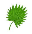palma leaf vector image vector image