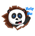 panda asking for help on white background vector image vector image