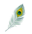peacock feather isolated realistic icon vector image
