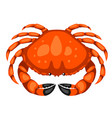 red crab isolated of seafood vector image