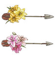 two arrows with colorful flowers lilies isolated vector image