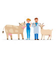 vets and healthy farm animals - cow and goat vector image vector image